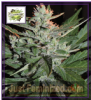 Cream of the Crop Auto Ko Crop Fem 5 Seeds